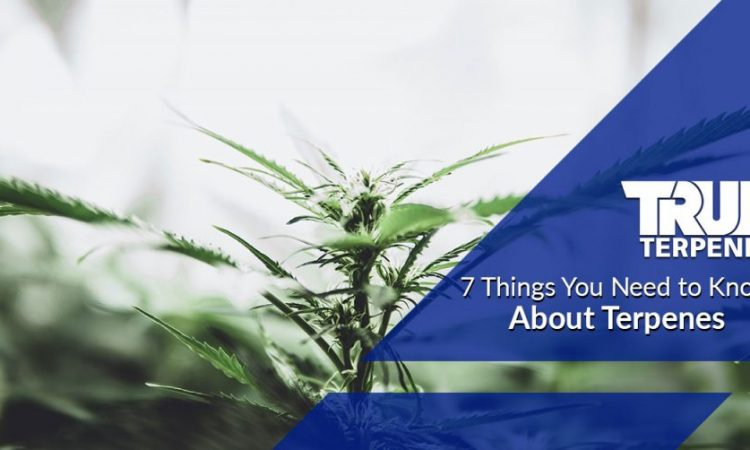 7 Reasons Why You Should Use Terpenes Products