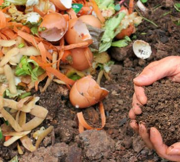 How To Compost Food And Garden Waste