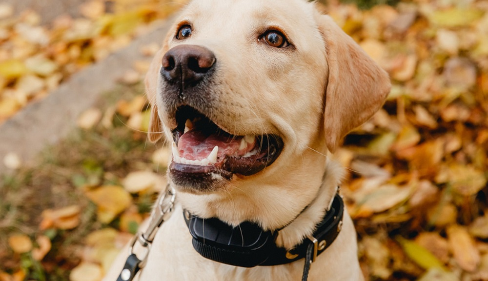 What is The Best Bark Collar